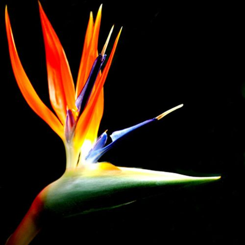 Ralfonso, Kinetic, Interactive, Sculpture, Public Art - Bird of Paradise
